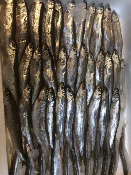 琵琶湖 公魚わかさぎ🐟