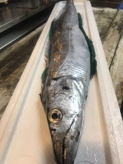 太刀魚🐟 京都甘〜いモロコシ🌽